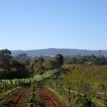 Jorbens-Vineyard-View